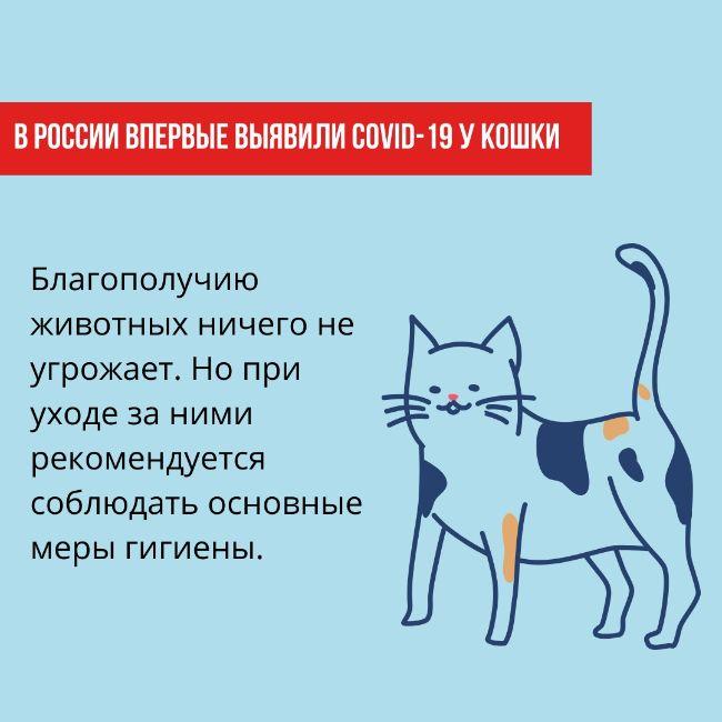 Заражение человека COVID-19 от животных маловероятно, считают эксперты